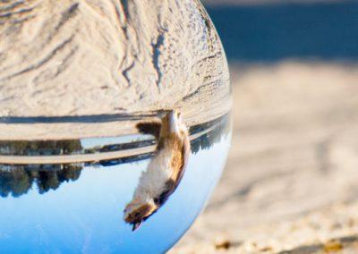 glazen bol met kat | GlazenBollen.NL
